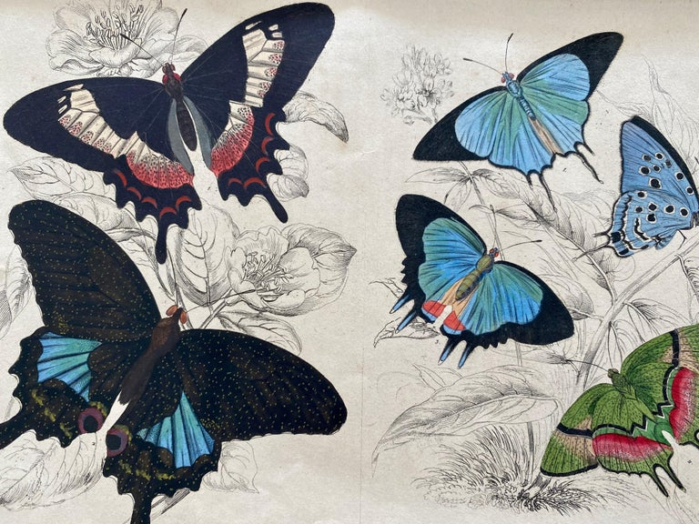 Antique Prints Rare Exotic Butterflies - Tropical Colourful Set Butterfly For Sale 3