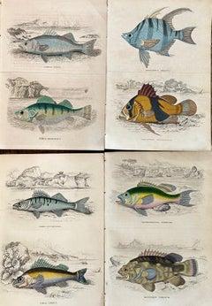 Set of Exotic Fish Antique Hand Coloured Print - Tropical Marine