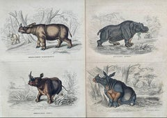 Rhinoceros Hand Coloured Antique Print - Exotic Africa Rhino Big Five Wildlife