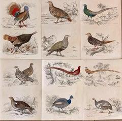 Antique Prints Rare Exotic Gamebirds - pheasant poultry partridge