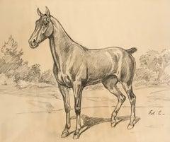 Cheval - Horse