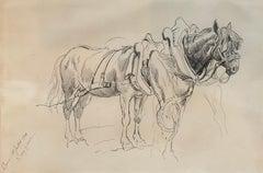 Chevaux - Horses