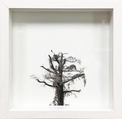 Spartan Tree