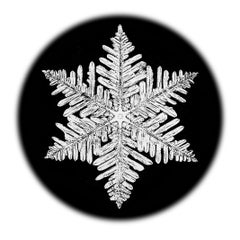 Snowflake Microscopy 10