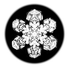 Snowflake Microscopy 14
