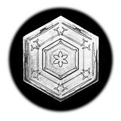 Snowflake Microscopy 20