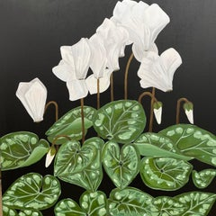 White Flowers on Stems over Green Leaves. Title - Cyclamen