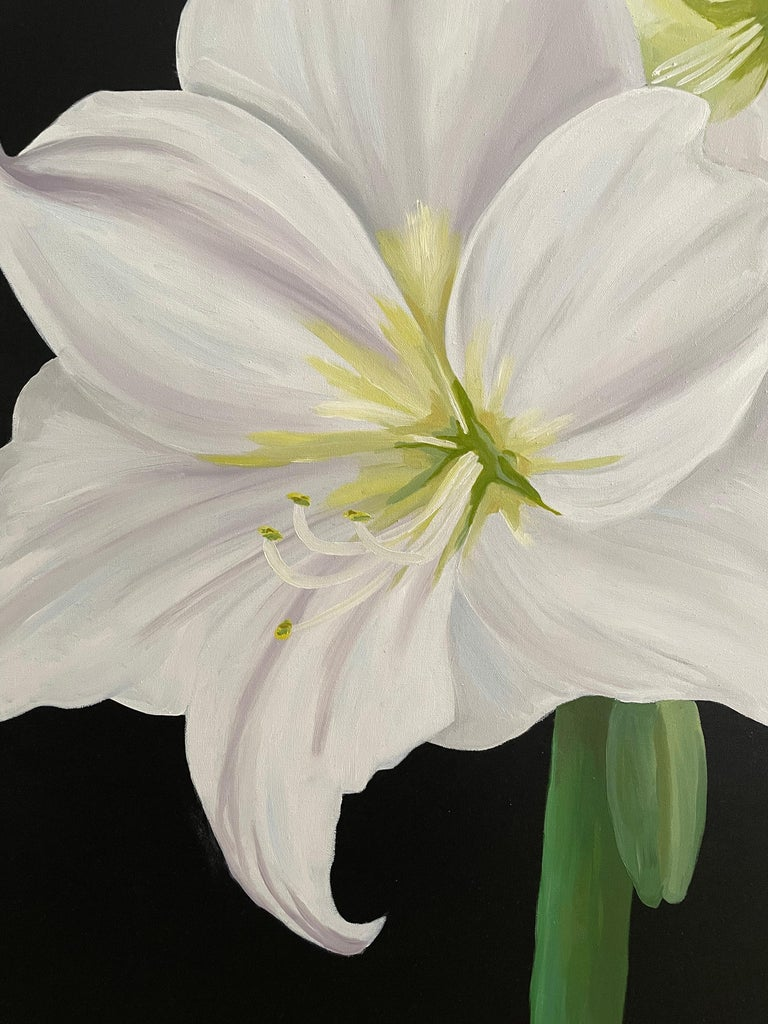 From the artist's recent flower series. Amaryllis with large petals reminiscent of Georgia O'Keefe standing on a straight green stem boldly set against a black background. Oil on canvas painted by American realist Ken Miller. Suitable for display in
