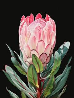 "Ora Sorensen, ""Protea I"", Photorealistic Flower Painting on Canvas"