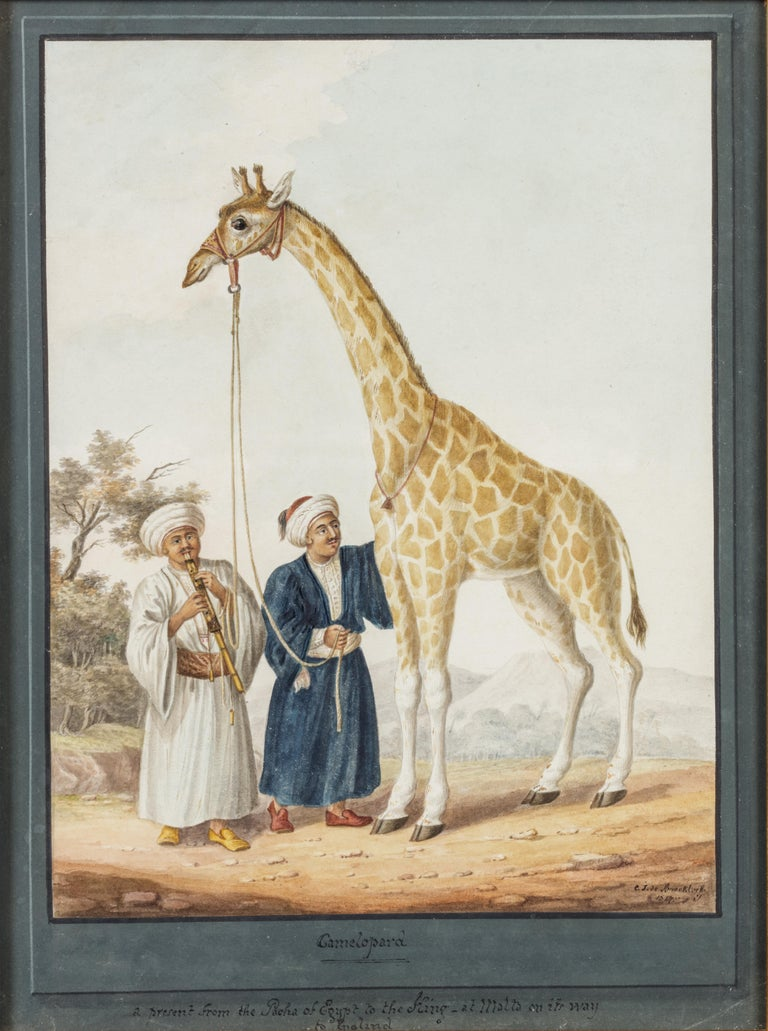 The King's Camelopard - Painting by Charles Frederick de Brocktorff
