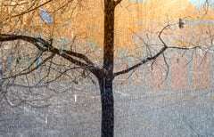 Eli Freiman, Autumn, Photograph, c-print on Diasec, 100x155 cm