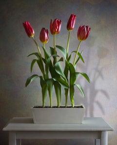 Albert Benaroya (Israeli), Red Tulipss, oil on canvas, 81x56 cm