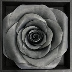 Square Rose on the Wall