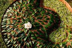 """Summer Magnolia,"" Archival inkjet print depicting hand-designed earthwork"