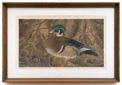 """""""Wood Ducks"""" by Janet Turner, Linocut/serigraph, 1972"""