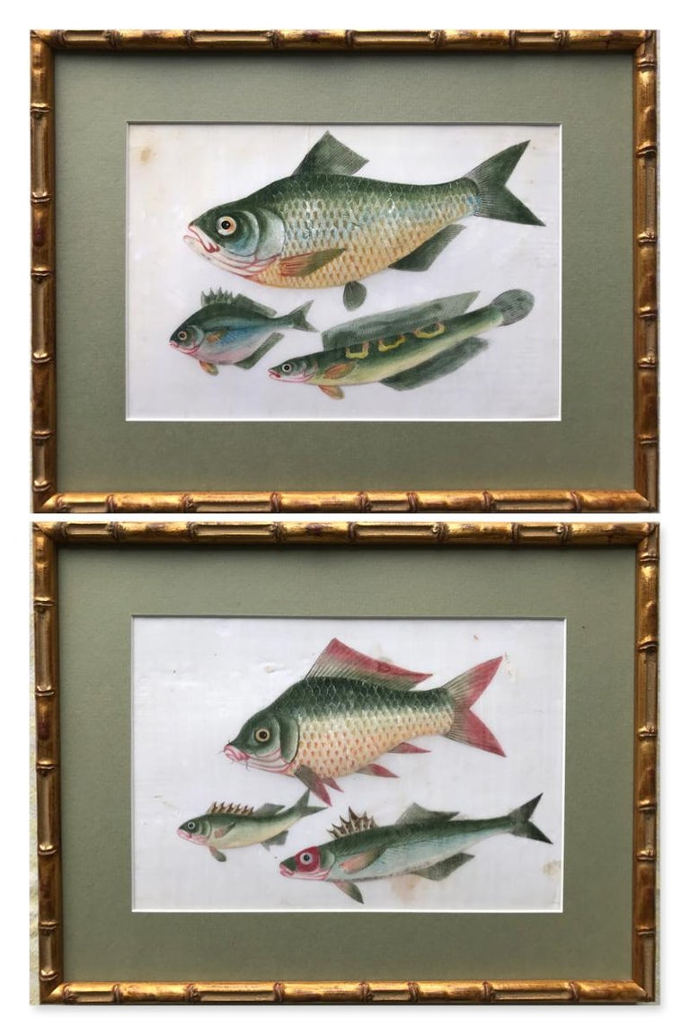 19th Century Chinese school Animal Art - A pair of 19th Century Chinese Export Rice Pith Paper watercolors of fish