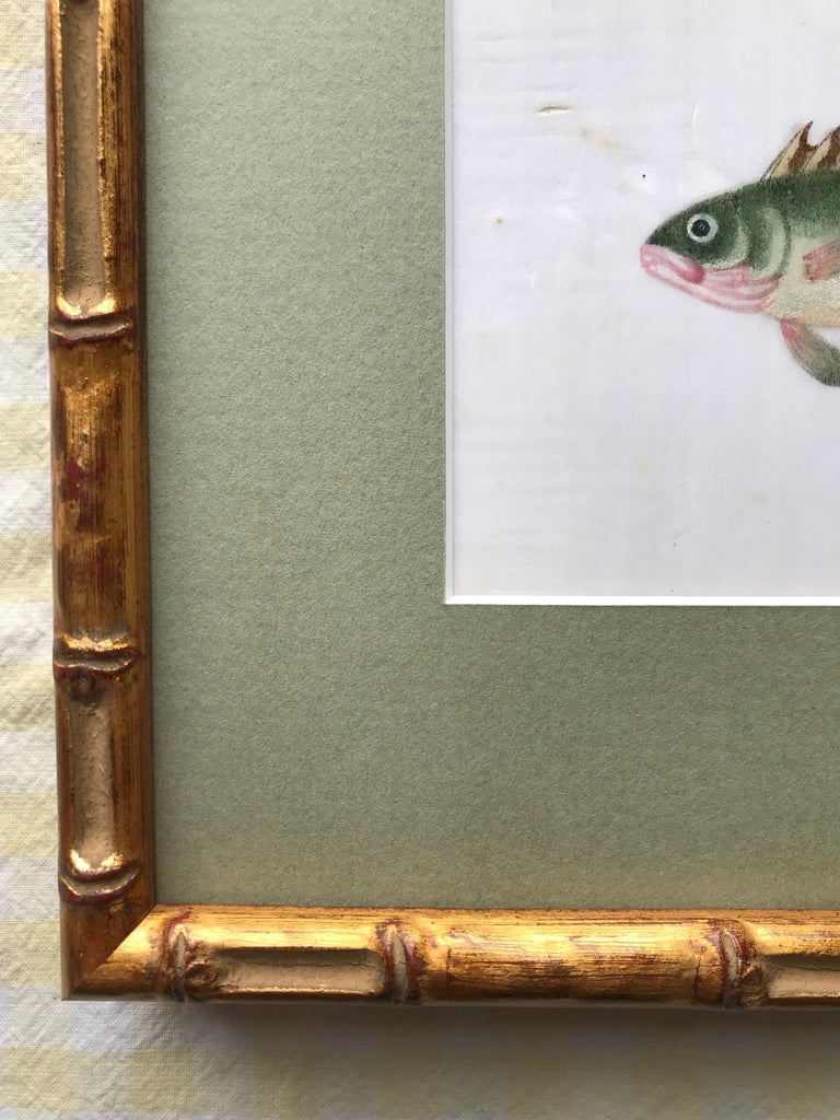 A pair of 19th Century Chinese Export Rice Pith Paper watercolors of fish For Sale 3
