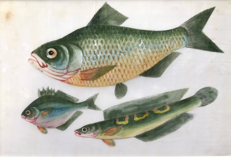 A pair of 19th Century Chinese Export Rice Pith Paper watercolors of fish - Naturalistic Art by 19th Century Chinese school
