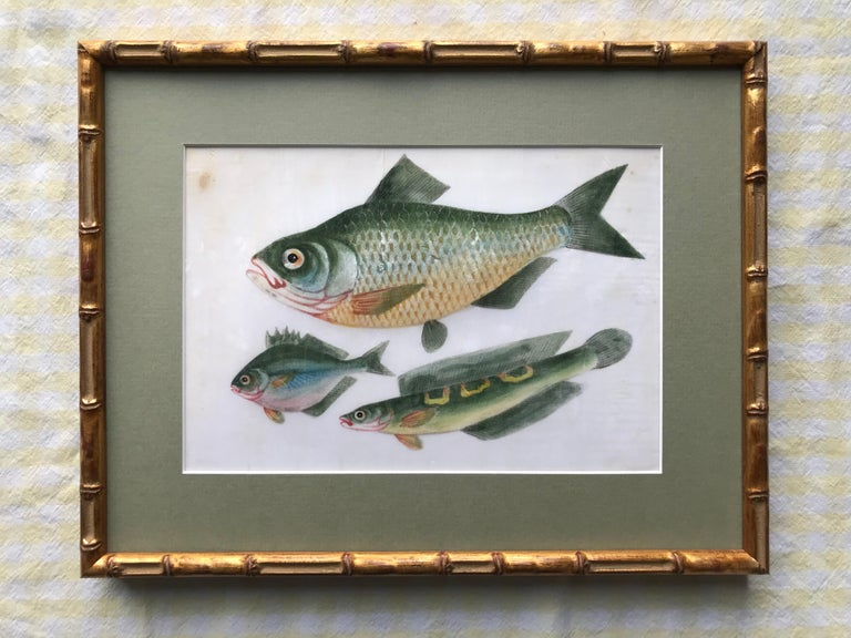 A pair of 19th Century Chinese Export Rice Pith Paper watercolors of fish - Gray Animal Art by 19th Century Chinese school