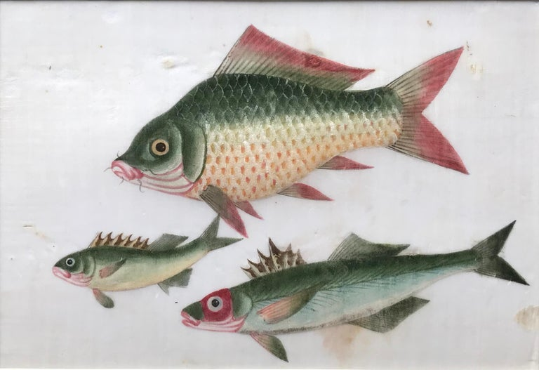 A pair of 19th Century Chinese Export Rice Pith Paper watercolors of fish For Sale 1