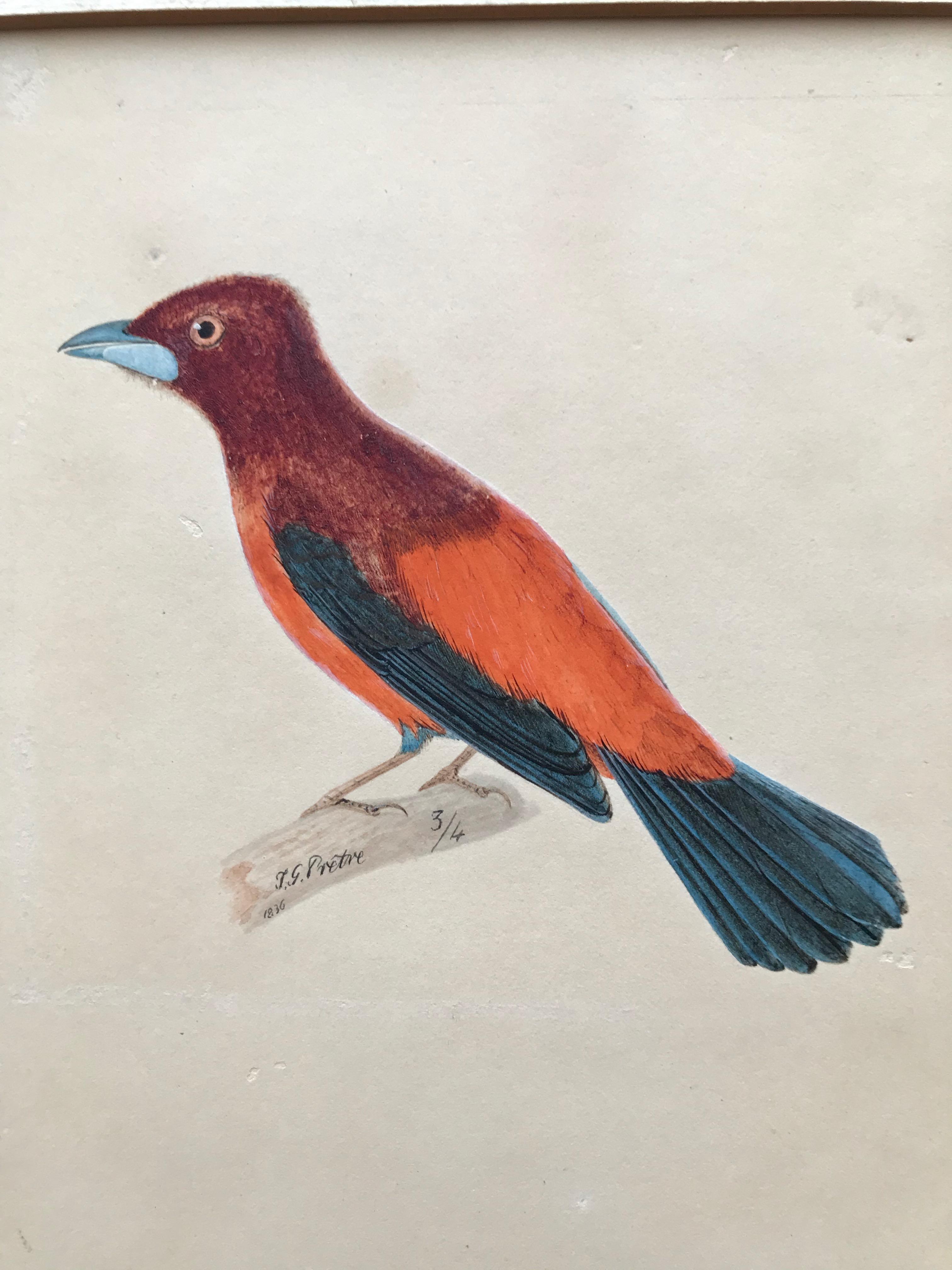 Jean Gabriel Pretre, Early 19th Century watercolor of Exotic bird, Swiss artist