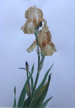 Glyn Morgan, Benton End artist, Still life of Iris