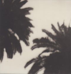 Calm as a Palm - 21st Century Contemporary Black and White Photographic Print