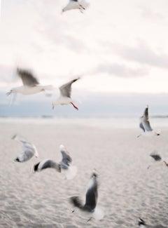 Seagulls - Contemporary Color Landscape Analog Photograph Medium Format