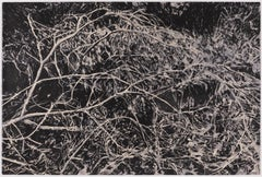 Whirl - Large Print of Tangled Branches with Foliage in Black and Gray