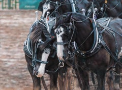 Team Meeting - Draft Horse Pastel Painting Equine Photorealism
