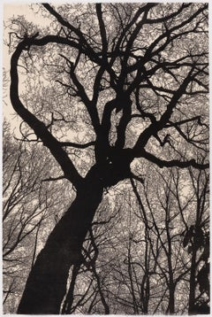 Night Descends on Mountain - Linocut Print of a Tree Silhouette in Black