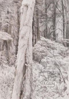 Forest Park - Twisted Tree in Forest Graphite Drawing Black and White
