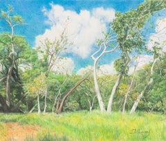 The Corner of Sycamore and Malaguerra - Colored Pencil Tree and Field Landscape