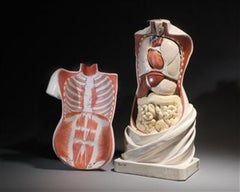 19th Century Didactic Torso Model by Jozef Steger, designed by Carl E. Bock.
