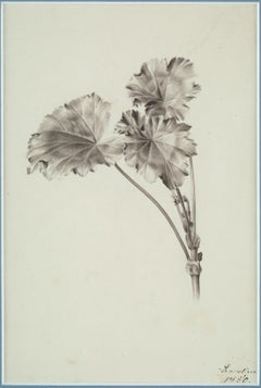 Old Master Drawing of a Flower, Still-Life, 19th Century, Study, Romantic Art