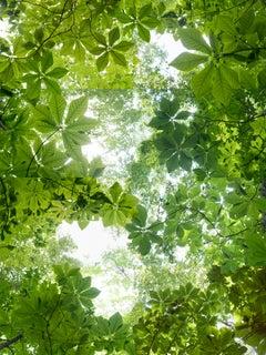 """Canopy Suite 344-002"" Contemporary Composite Landscape Photography - JMW Turner"