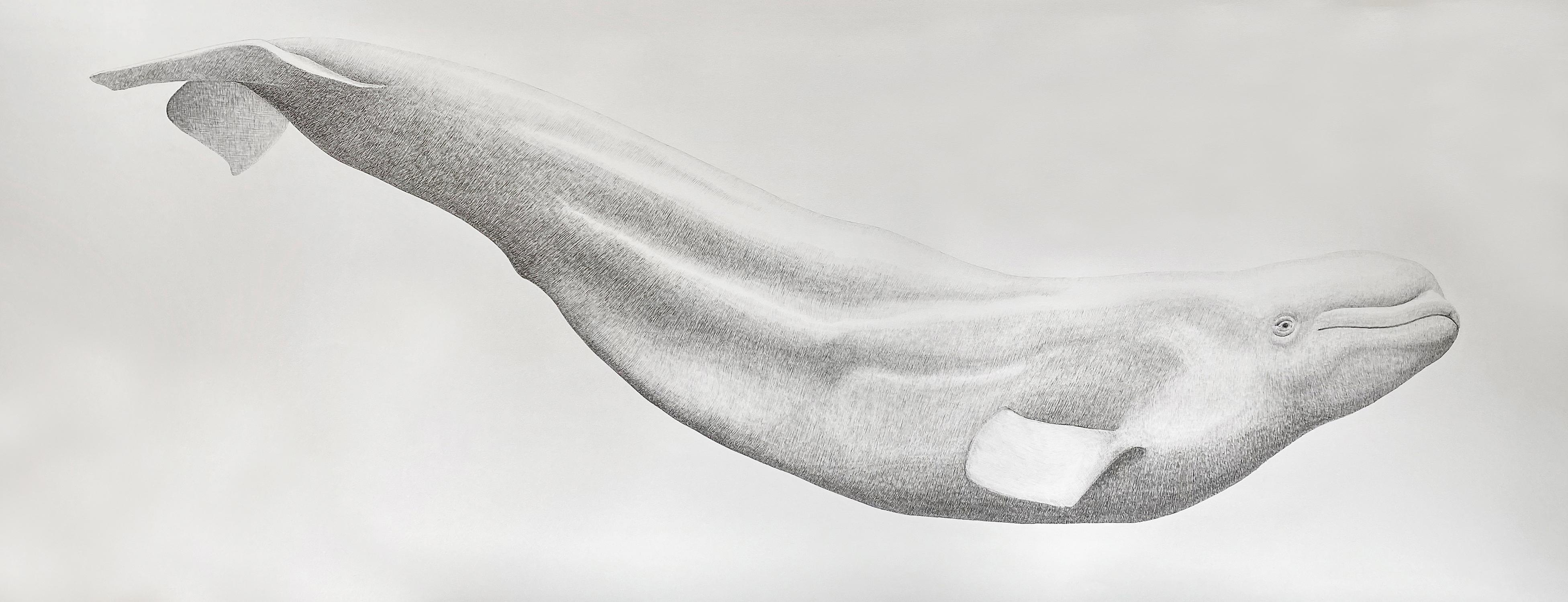 'Beluga' - large-scale animal drawing - Chuck Close - Rembrandt