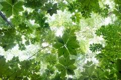 """Canopy Suite 140-149"" Contemporary Composite Landscape Photography - JMW Turner"