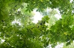 """Canopy Suite 029-821"" Contemporary Composite Landscape Photography - JMW Turner"