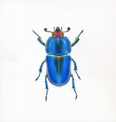 'Blue Beetle #4' - insect illustration - hyperrealism - Chuck Close