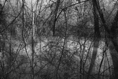 'Thicket' - Black and White - Landscape Photography - Eliot Porter