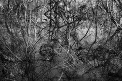 'Winter Opus' - Black and White - Landscape Photography - Eliot Porter