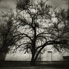 'Quonset Tree' - Black and White Photography - Landscape - Walker Evans