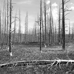 'Burned Forest' - Black and White Photography - Landscape - Walker Evans