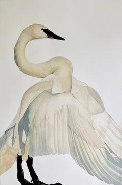 """Counterpoint"" - Swan Portrait - Large Scale Animal Drawing - Audubon - Durer"