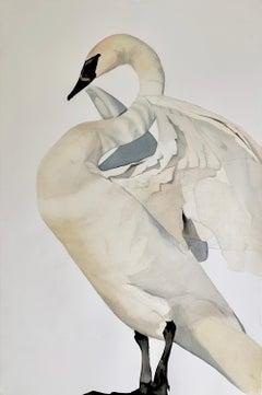 """""""Rest"""" - Swan Portrait - Large Scale Animal Drawing - Audubon - Durer"""