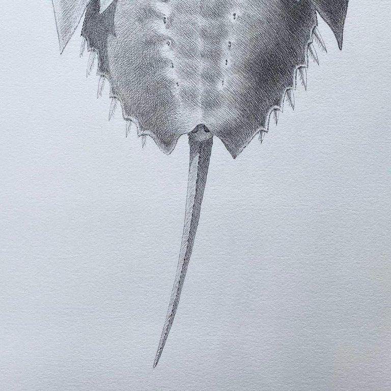 'Horseshoe Crab' - realist animal drawing - Chuck Close - Rembrandt - Art by Hannah Hanlon