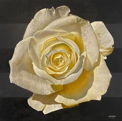 """White Rose III"" - floral painting - rose still life - Georgia O'Keeffe"