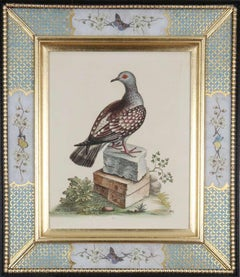George Edwards: 18th Century Engravings of Birds