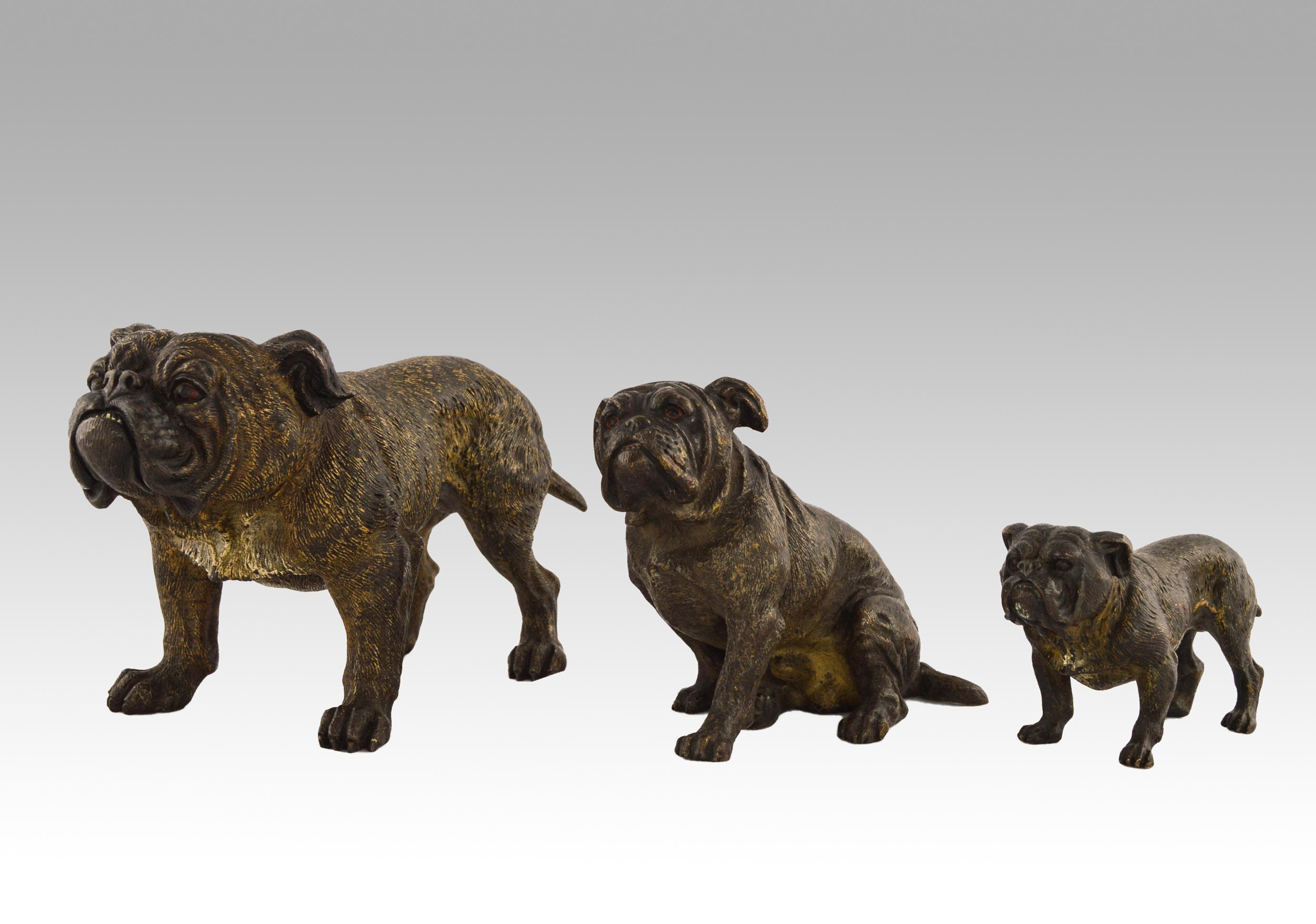 Set of 3 cold painted Austrian bronze sculptures of Bulldogs